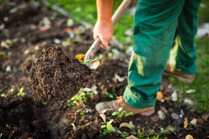 How Do I Grow a Garden During a Drought?